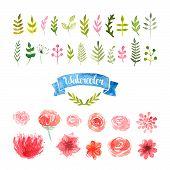 foto of pink rose  - Watercolor flowers - JPG