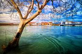 picture of flood  - Dry tree protruding from the swollen river during terrible floods - JPG