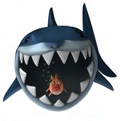 pic of foodchain  - Fun shark - JPG