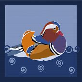 stock photo of duck-hunting  - Colorful wood duck in water  - JPG