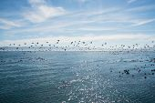 stock photo of flock seagulls  - A large flock of birds flying over the ocean - JPG