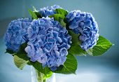 pic of flower arrangement  - blue hydrangea blossom in a vase - JPG