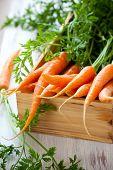 Zanahorias orgánicas frescas en una caja de madera