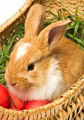 Cute brown bunny in Easter eggs basket