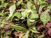 Spring Leaf Salad