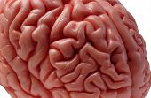 Brain Model 05