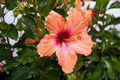 picture of phallic  - Phallic orange and red flower - JPG