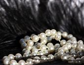 White Pearls On Black Feather