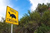 Unique turtle crossing sign in B.C. Canada
