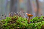 Green en paddenstoelen
