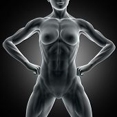 3D render of a muscular female figure with close up of abdominal muscles poster