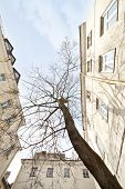 European oldtown courtyard with tree, wide angle view.