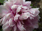 spring tenderness flower