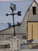foto of wane  - A rustic rooster topped weather wane indicates wind direction. ** Note: Slight graininess, best at smaller sizes - JPG