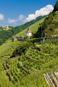 grand cru vineyard and Chapel of St. Urban, Thann, Alsace, France