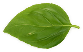 stock photo of basil leaves  - macro of a single basil leaf against white background - JPG