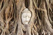 the head of the sandstone buddha