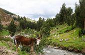 Esel am Fluss
