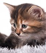 Upset Cute Kitten In A Warm Knitted Sweater Isolated Over White Background poster