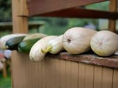 Bunch Of Fresh Courgettes Placed On Veranda, Shallow Dof, Outdoor Shot poster