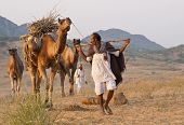 Arriving at the Pushkar Camel Fair