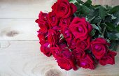 Beautiful Rose Flower In Garden. Rose Flower Background. Roses Flower Texture. Lovely Rose. Roses Fl poster