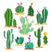 Set Of Wildlife Cactus Or Succulent Plant. Blossom Of Saguaro And Cereus, Golden Barrel Cacti And St poster