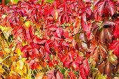 Natural Pattern Made By Nature. Colorful Season. Beautiful Autumn Background. Autumn Leaves Backdrop poster