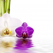 pic of reorder  - orchids - JPG