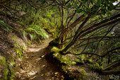 mystical track