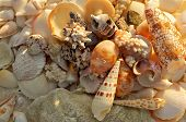 Ocean Shells Background