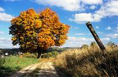 autumnal view of colored tree and rural road