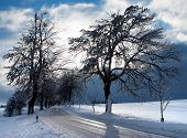 wintry view of tree lined road with shadow of tree sun and cloudy sky