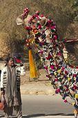 Regal Camel