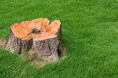 Stump Tree Plant On Green Field