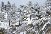snowy forrest