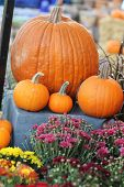 large and small pumpkins in garden