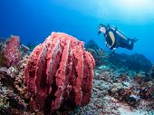 Diver And Giant Sponge