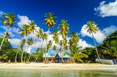 stock photo of shacks  - Colorful shack on a beach surrounded by palm trees in San Andres y Providencia Colombia - JPG