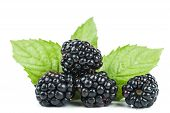 stock photo of blackberries  - Close up view of fresh ripe blackberries - JPG