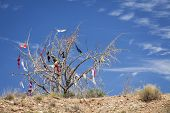 picture of oddities  - Dead tree covered in bras hung by travelers passing by Utah - JPG