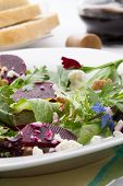 picture of baby goat  - Beets with walnuts goat cheese and baby greens organic salad.