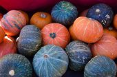 Multi-Colored Gourds at the Farmers Market