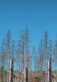 Dry Dead Trees