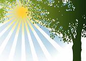 Vector Tree And Sunshine