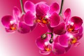 Dark Purple Orchids