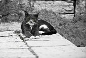 Serious Pretty Cat On Old Town Street