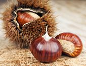 chestnuts and curly