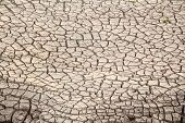 dried and cracked earth