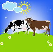 Dairy Cows on a green meadow.Sticker